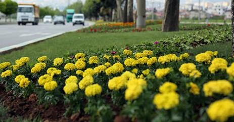 Kahramanmaraş Mevsimlik Çiçeklerle Renkleniyor