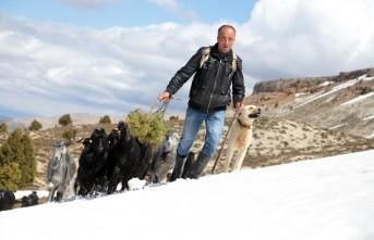 Göksun'da Çobanların Zorlu Yolculuğu