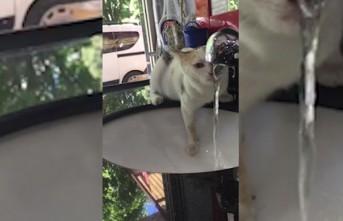 Minik Kedi Susuzluğunu Musluktan Giderdi