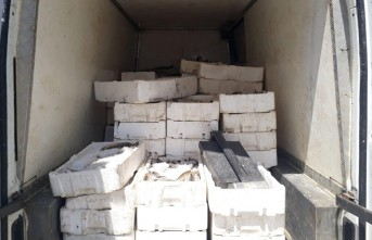 Pazarcık'ta Bin 800 Kilo Kaçak Balık Ele Geçirildi