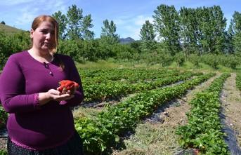 Tavsiye Üzerine Çilek Bahçesi Kurdu Başarılı Bir İş Kadını Oldu