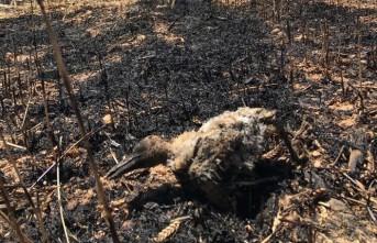 Elektrik Teline Çarpan Karga Buğday Tarlasını Küle Çevirdi