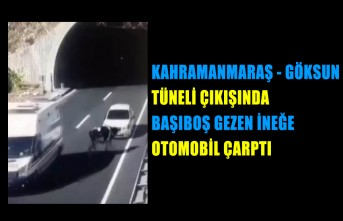 Tünel Çıkışında Başıboş Gezen İneğe Otomobil Çarptı