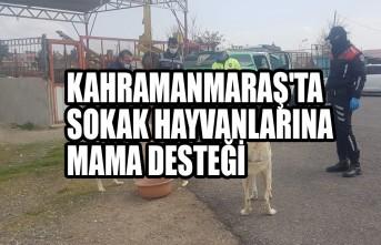 Kahramanmaraş'ta Sokak Hayvanlarına Mama Desteği