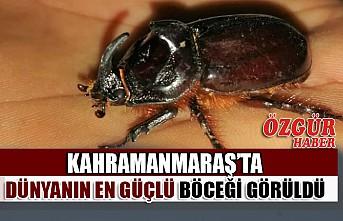 Kahramanmaraş'ta Dünyanın En Güçlü Böceği Görüldü