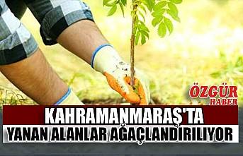 Kahramanmaraş'ta Yanan Alanlar Ağaçlandırılıyor