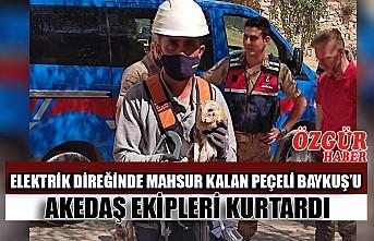 Elektrik Direğinde Mahsur Kalan Peçeli Baykuş'u AKEDAŞ Ekipleri Kurtardı