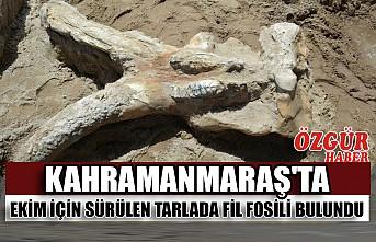 Kahramanmaraş'ta Ekim İçin Sürülen Tarlada Fil Fosili Bulundu