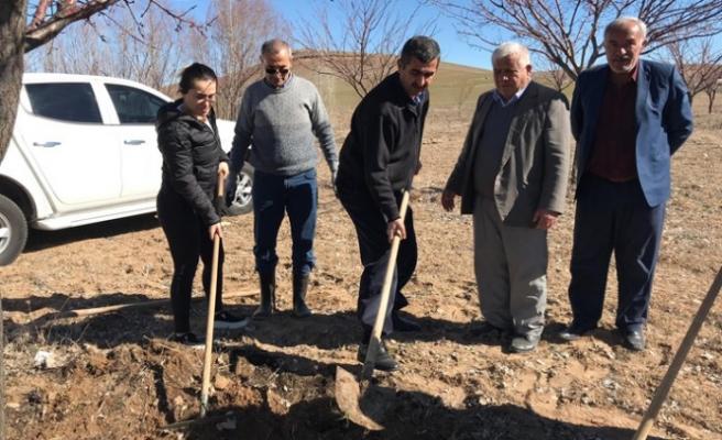 Elbistan'da Kayısı Ağaçlarına Gidya Uygulaması