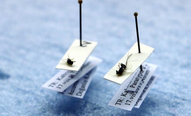 Kahramanmaraş'ta İki Yeni Böcek Türü Bulundu