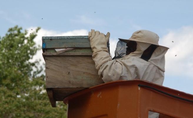Kovandan Kaçan Arılar Apartmanda Oğul Verdi