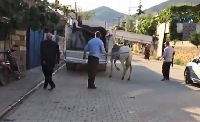 Türkoğlu'nda Atına Sopayla Vuran Şahsa Ceza Kesildi