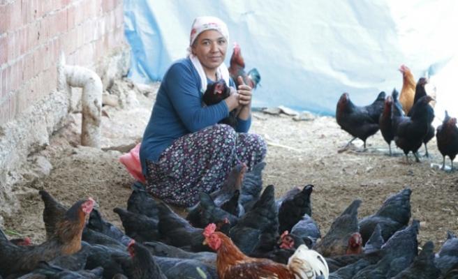 Geçinmek İçin Başladığı İşi Büyüten Kadının Hedefi Tavuk Çiftliği Sahibi Olmak