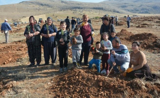 Kahramanmaraş'ta Mahalleli Çöplük Alanı Ormana Dönüştürüyor