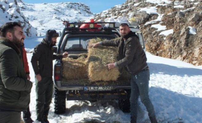 Elbistan'da Yaban Hayvanları İçin Doğaya 5 Ton Yem Bıraktılar