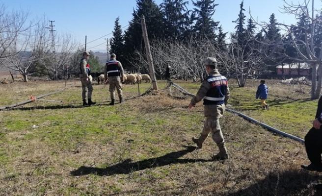 Türkoğlu'nda Koyun Hırsızları Jandarmadan Kaçamadı