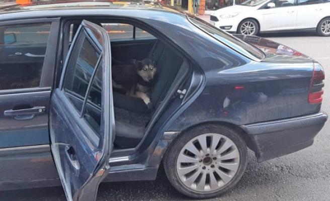 Kahramanmaraş'ta Açık Kapıdan Otomobile Giren Köpeği Belediye Ekibi Çıkardı