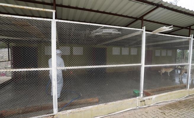 Hayvan Barınakları Dezenfekte Edildi