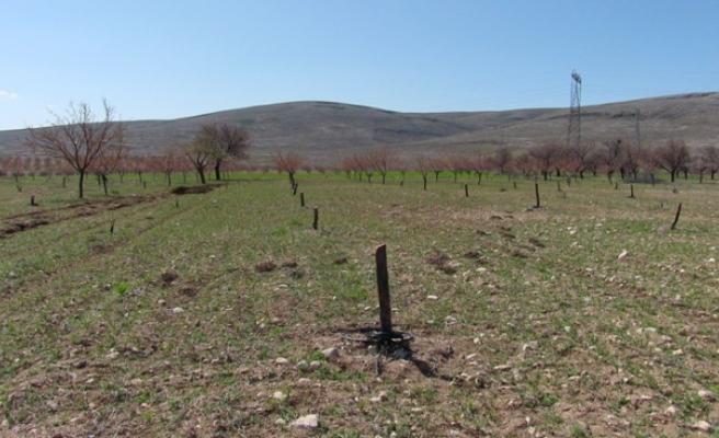 Jandarma, Elbistan'da Kayısı Ağaçlarını Kesen Kişileri Arıyor