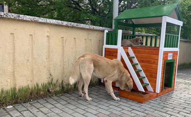 Köpek Evlerinin Montajı Tamamlandı
