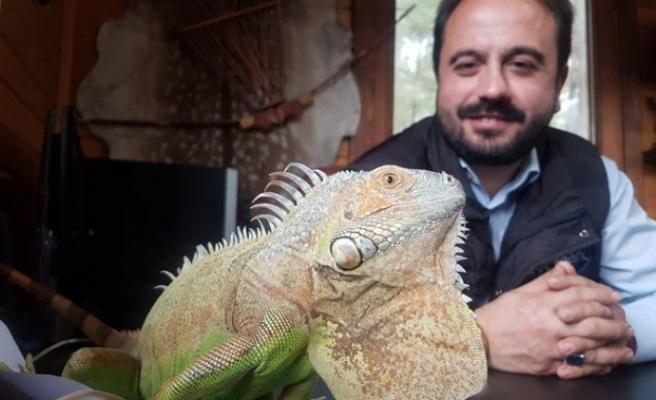 4 Yıldır Beslediği İguana En Yakın Arkadaşı Oldu