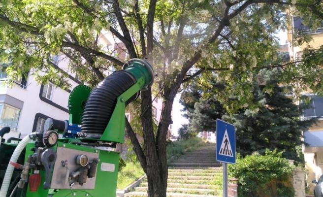 Ağaçlar Zararlılara Karşı İlaçlanıyor