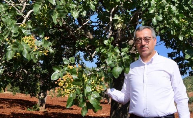 Başkan Güngör; Baklavanın Fıstığı Pazarcık'tan