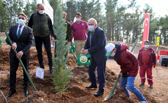 Kahramanmaraş'ta Yanan Ormanlık Alan Çocukların Eliyle Yeşerecek