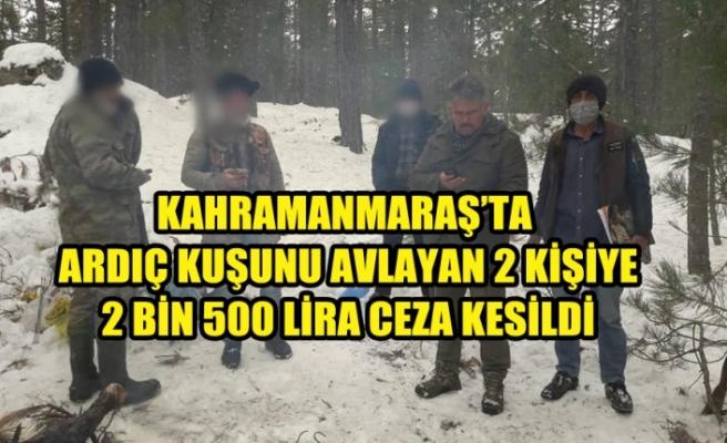 Ardıç Kuşunu Avlayanlara 2 Bin 500 Lira Cezası Kesildi