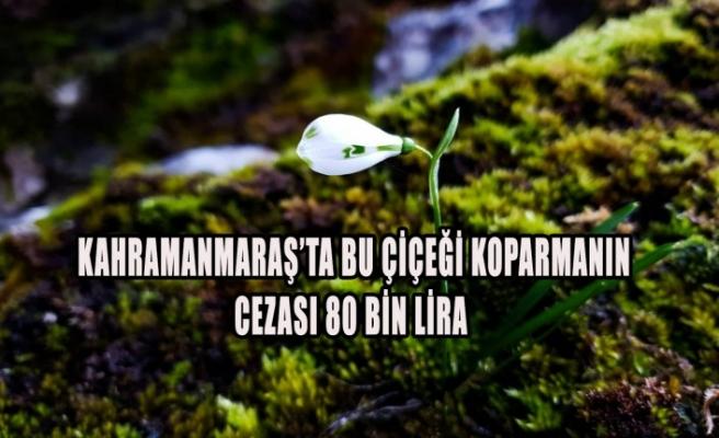 Kahramanmaraş'ta Bu Çiçeği Koparmanın Cezası 80 Bin Lira