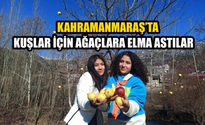 Kahramanmaraş'ta Kuşlar İçin Ağaçlara Elma Astılar