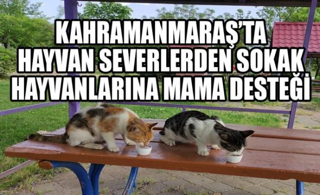 Kahramanmaraş'ta Hayvan Severlerden Sokak Hayvanlarına Mama Desteği