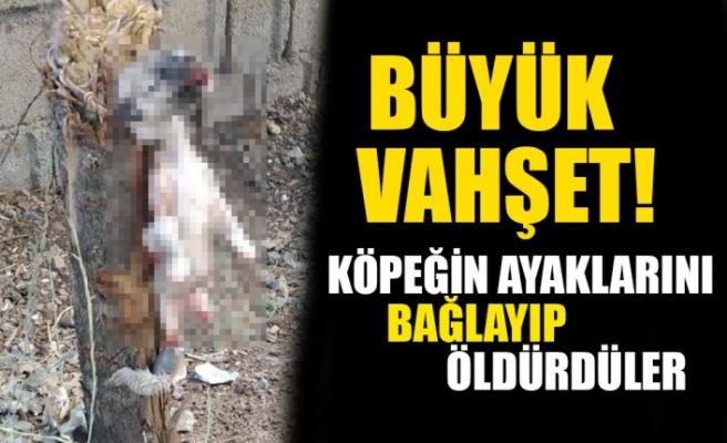Kahramanmaraş'ta Vahşet! Köpeğin Ayaklarını Bağlayıp Öldürdüler