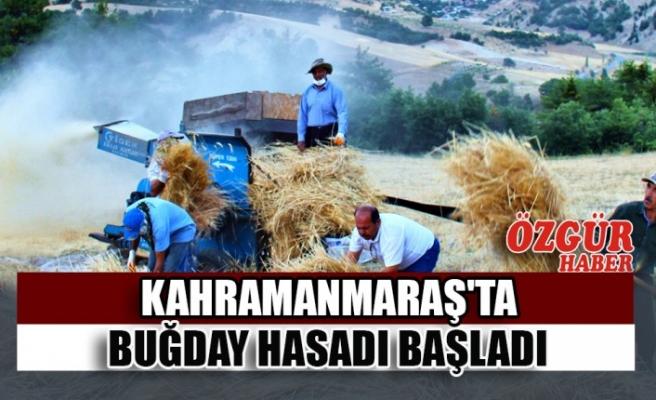 Kahramanmaraş'ta Buğday Hasadı Başladı
