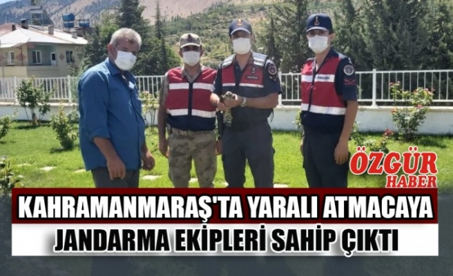 Kahramanmaraş'ta Yaralı Atmacaya Jandarma Ekipleri Sahip Çıktı
