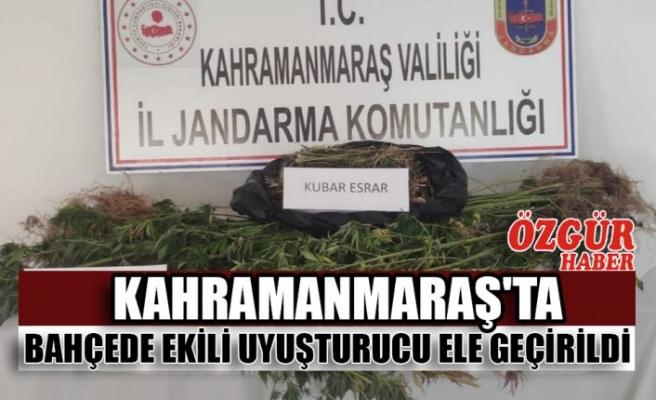 Kahramanmaraş'ta Bahçede Ekili Uyuşturucu Ele Geçirildi