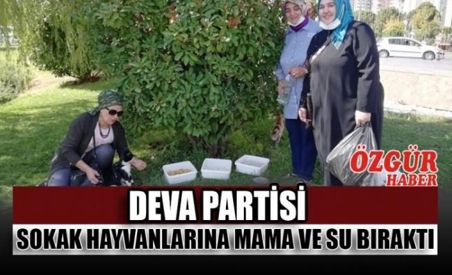 DEVA Partisi Sokak Hayvanlarına Mama ve Su Bıraktı