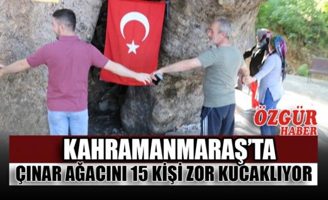 Kahramanmaraş'ta Çınar Ağacını 15 Kişi Zor Kucaklıyor