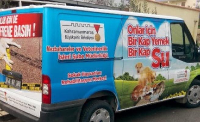 Büyükşehir 4 Bin Sokak Hayvanına Sahip Çıktı