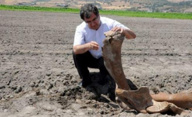 """Türkoğlu'nda """"Antik Fosil"""" Bulundu"""