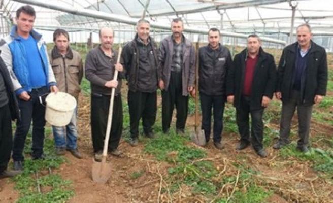 Türkoğlu'nda Seracılık Yaygınlaşıyor
