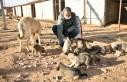 Elbistan'da Sokak Hayvanları İçin Yem Bırakıldı