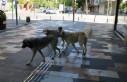 Köpekler, Boş Sokakların Keyfini Çıkardılar