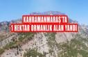 Kahramanmaraş'ta 1 Hektar Ormanlık Alan Yandı