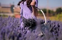 Afşin'de Kırsal Kalkınma Aromatik Bitkilerle Sağlanacak