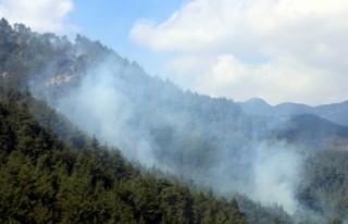 10 Hektar Ormanlık Alan Küle Döndü