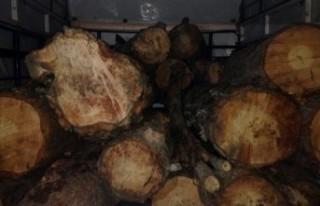 Kahramanmaraş'ta Kaçak Ağaç Kesimi Operasyonu