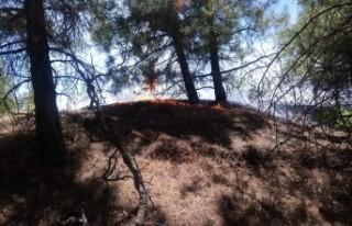 Bahçe Temizliği Yaparken Ormanı Yaktı