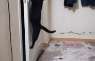Patisiyle Kapıyı Açan Kedi Fenomen Oldu