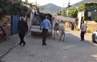 Türkoğlu'nda Atına Sopayla Vuran Şahsa Ceza...